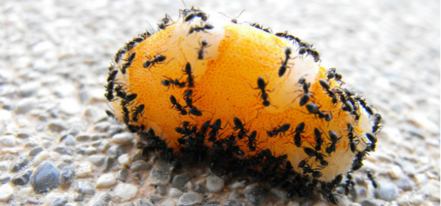 Prevent Pavement Ants With These Simple Tips