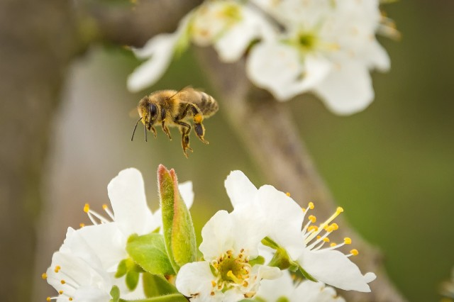 The Benefits Of Bees To Your Garden When Well Controlled Jp