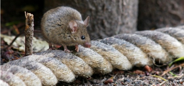 How To Fight The Common Rodents of New England