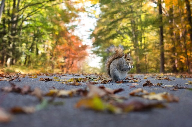 Squirrels Everywhere: Why This Year Has Been So Heavy On Squirrels