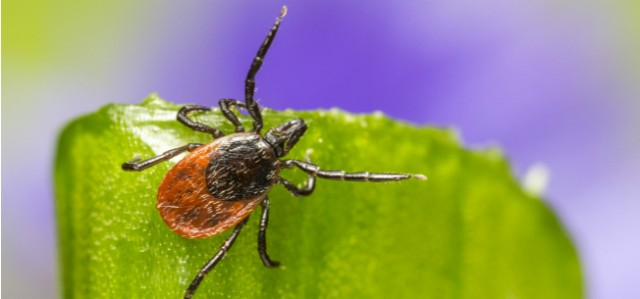 7 Tips To Keep Ticks Away This Spring