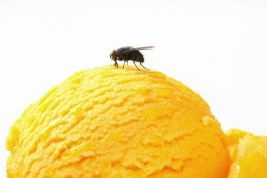 Effectively Manage Fly Problems in Your Restaurant