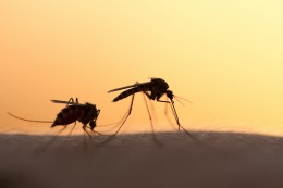 5 Little-Known Facts About Mosquitoes