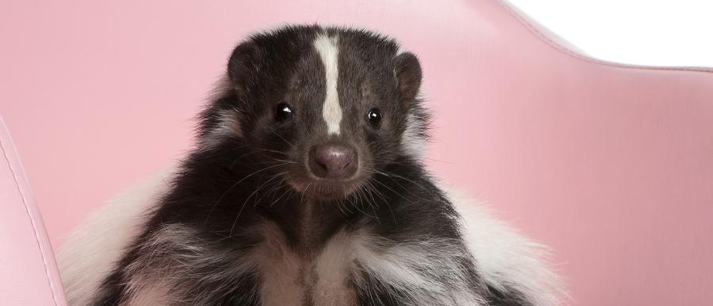 Skunks, Love and Roadkill: It's February in New England