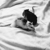 5 Tips For Keeping Rodents Away From Your Hotel