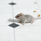 Spot Signs of Mice In Your Restaurant (Before Your Customers Do)