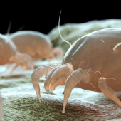 Bed Bugs vs. Dust Mites: What's the Difference?