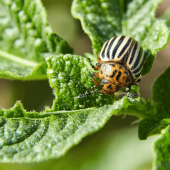Do Some Plants Attract More Pests than Others?