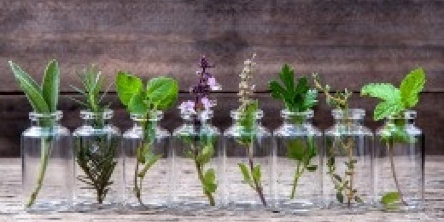 Do Certain Plants And Herbs Work As Natural Pest Repellents