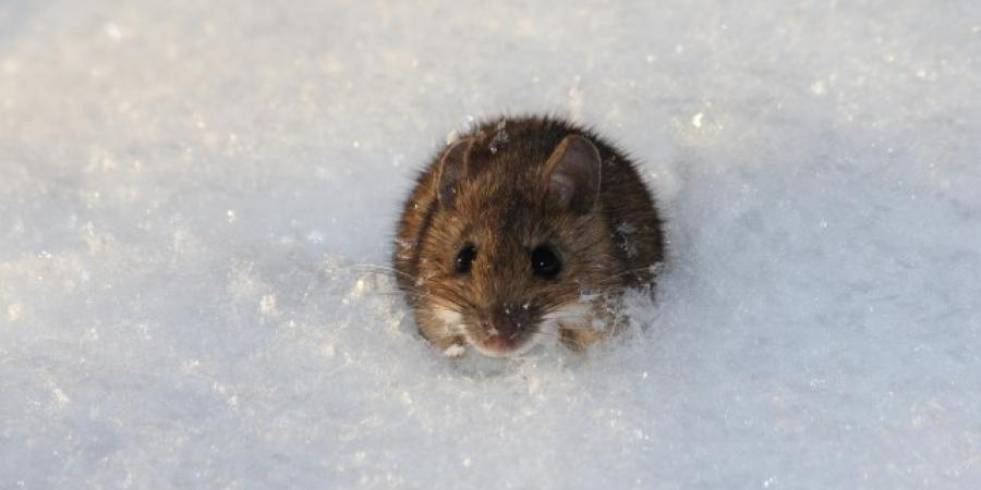 Winter Pests To Watch Out For In New England