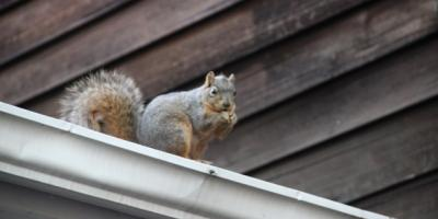 5 Ways New Englanders Keep Squirrels Out Of Chimneys And Attics