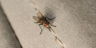Flies Not Welcome: Tips For Fly Control In Hotels