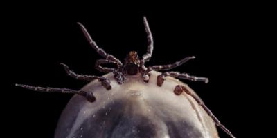 Tick Check: How To Keep Family & Pets Safe This Summer