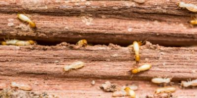 Terminating Termites: How To Stop An Infestation In Its Tracks