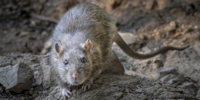 Here's Where Mice Hide In Your Home During the Winter | JP
