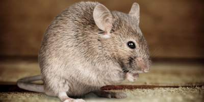 Reservation for a Rat or Mouse? How to Identify Unwanted Patrons