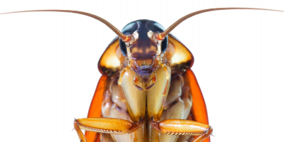 Roaches: When to Ignore them and When to Call the Pros