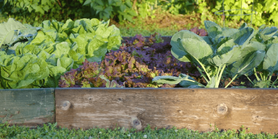 Keeping Pests Out of Your Veggie Garden