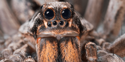 Seeing Spiders? You're Not Alone.
