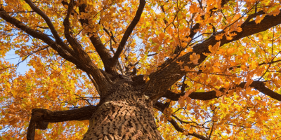 A tree with fall foliage