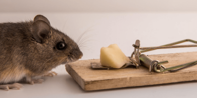 Why You'll Never See Cheese in Our Mouse Traps