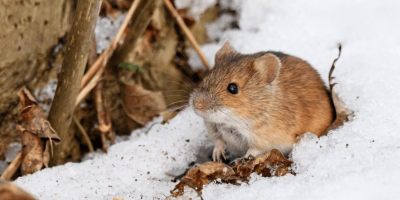 8 DIY Tips for Keeping Winter Pests Out