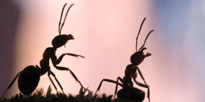 Don't Wait for the Ants to Come Marching in