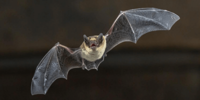 How to Deal with Bats in the Winter Months