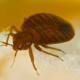 5 Effective Methods For Bed Bug Control in Multifamily Housing