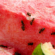 9 Tips for Keeping Ants Out Of Your Kitchen This Summer