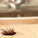 Roaches Don't Tip: How To Keep Roaches Out of Your Restaurant